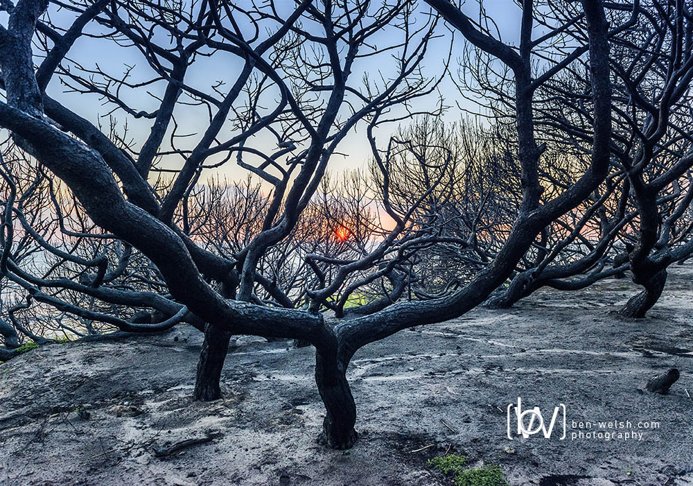 Burnt Forest. Tarifa, Cadiz. Spain.