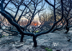 Burnt Forest. Tarifa, Cadiz. Spain.