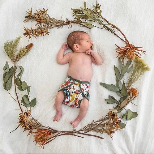 Seedling baby - native gum