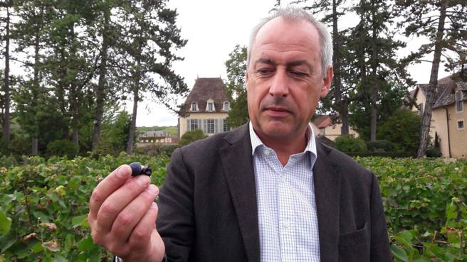 Dans le jardin d'Albéric Bichot / Le Clos des Ursulines / Pommard (Bourgogne)