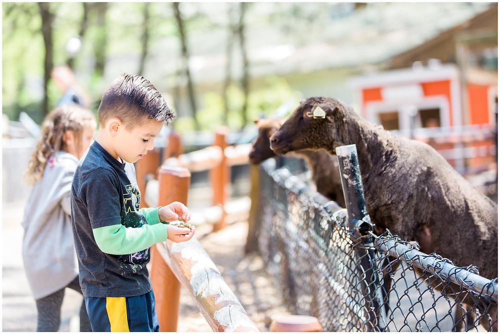 feeding goats at zoo birthday party