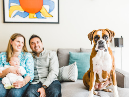 show me your sf | pacific heights // san francisco family photographer