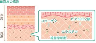 皮膚の構造イラスト.png