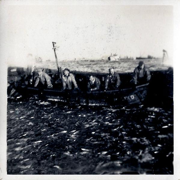 sildefiske 7.jpg