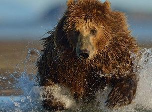 bear-1-800x400.jpg