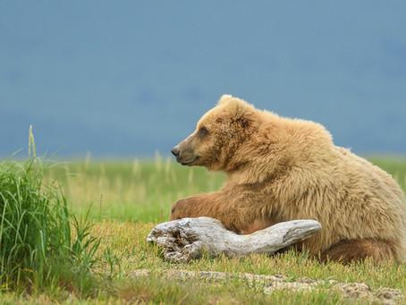 ALASKA BEARS