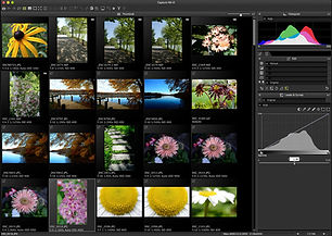 Capture-NX-D-thumbnail-view-flora.jpg