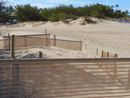 The Role of Fences on our Sand Dunes