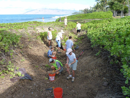 Clearing Dune Wetland Areas
