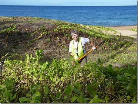 Kamaole Beaches have 'Working Class' Dunes