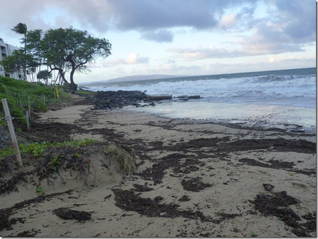 Storm-Cut erosion on our Beaches