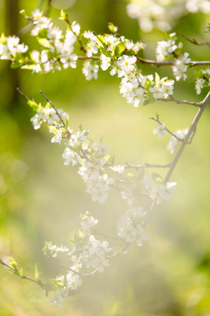Forår - smuk natur