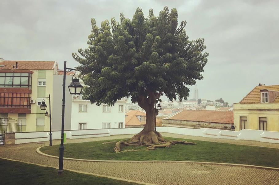 'A good, fine tree' 2020, Cacilhas