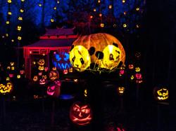 Pandas_Pumpkin_Carving_4.jpg