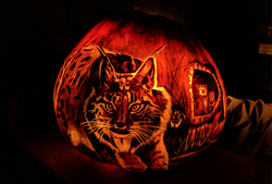 lynx_pumpkin_carving_edited.png