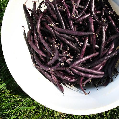 Burgundy Beans