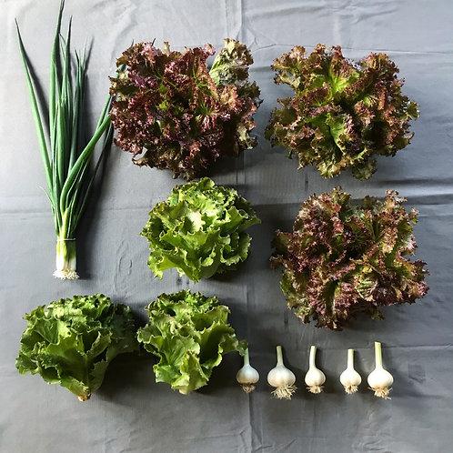 Seasonal Harvest Box 2 - $20
