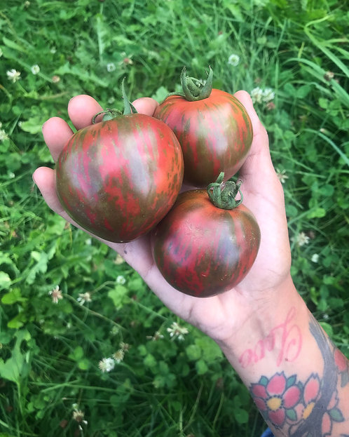 Pink Boar Tomatoes
