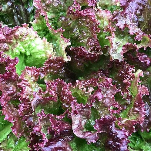 Bulk Lettuce - 5 Heads