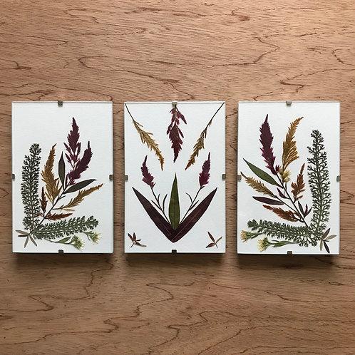 Pressed Flower Frames