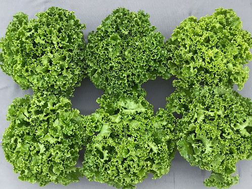 Salad Lover