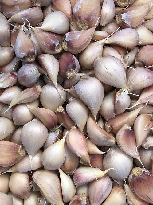 Seed Garlic - Porcelain Hardneck - Music Variety