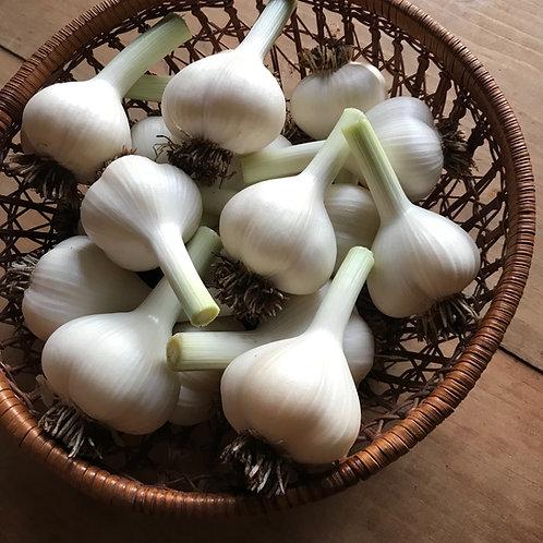 Garlic - 3 lb. Bulk ($8 / lb.)
