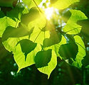 highquality_pictures_of_the_sun_leaves_1
