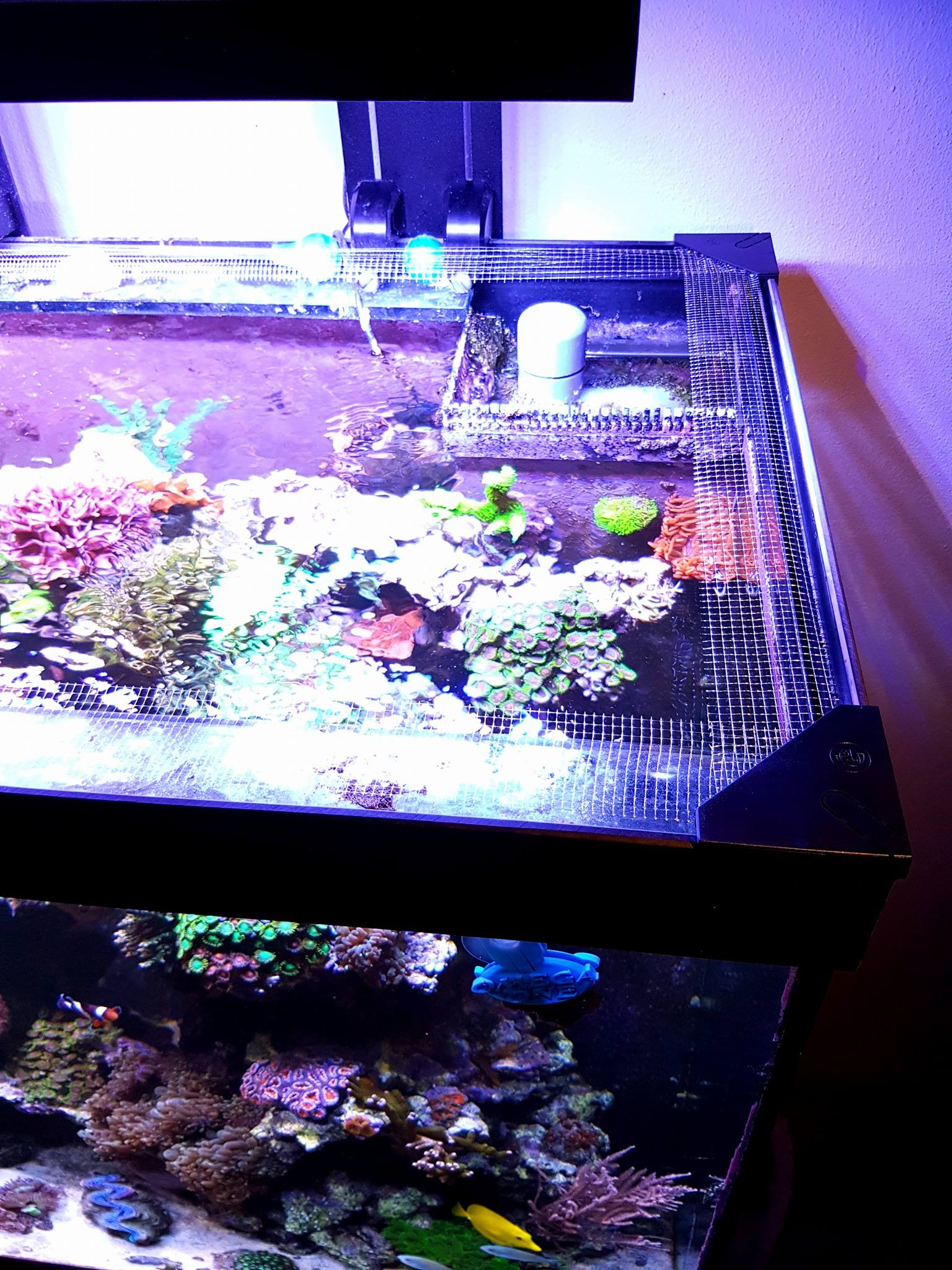 DIY Mesh screen for aquarium