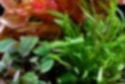 Freshwater_03-uai-720x487.jpg