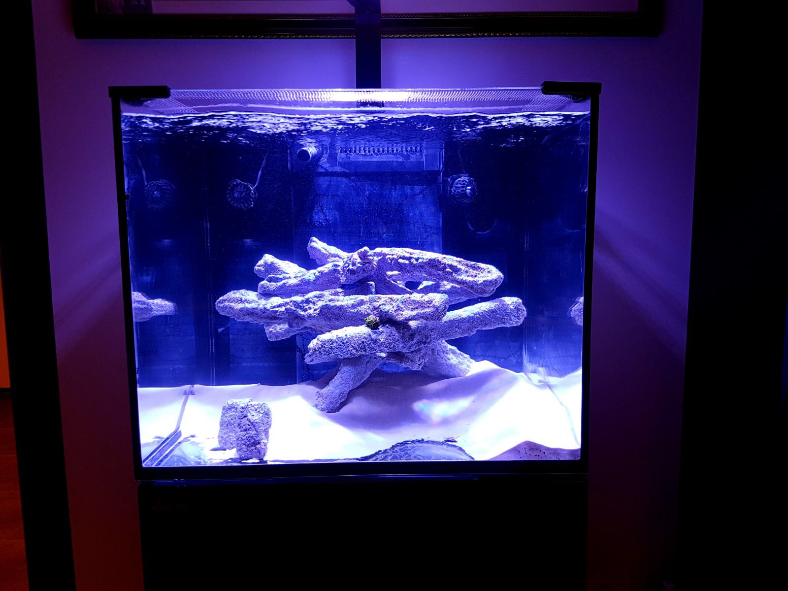 Rimless aquarium cover screen