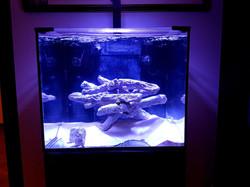 Rimless aquarium cover screen