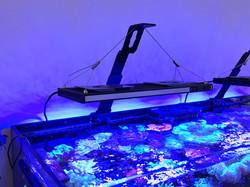 Aquarium LED light support