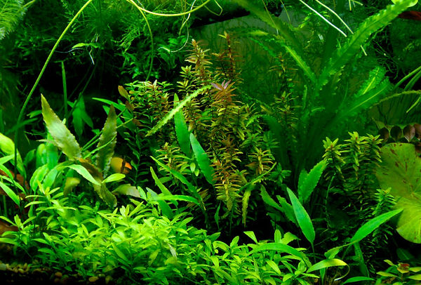 Freshwater_02-uai-720x487.jpg