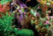 Freshwater_01-uai-720x487.jpg