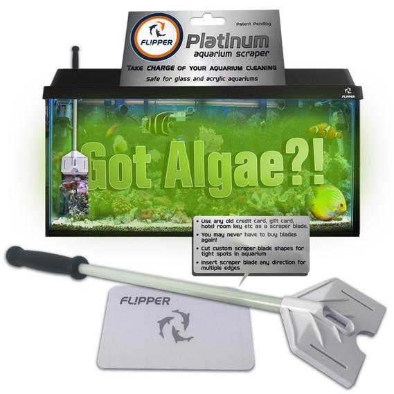 Algea scraper for acrylic aquarium