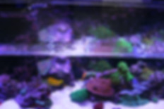Jump guard aquarium