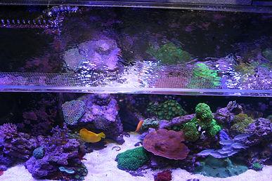 Jump guard aquarium