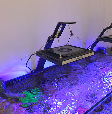 Bananaquarium Universal Light Support (9