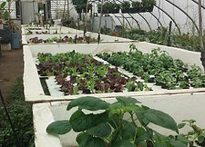center-row-greenhouse-hydroponics.jpg