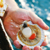 ScallopFishing-200x126.jpg