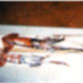 OffshoreSquid-200x137.png