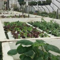 center-row-greenhouse-hydroponics-200x14