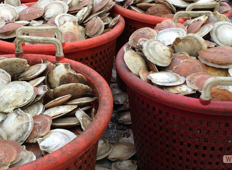 CFF Awarded Four NOAA Scallop Research Set-Aside Grants