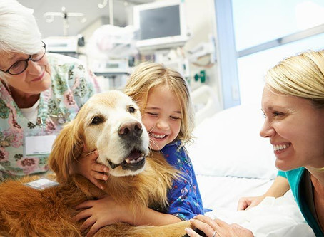 Therapy dog:  getting started