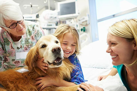 Golden-Retriever-therapy-dog-visiting-a-