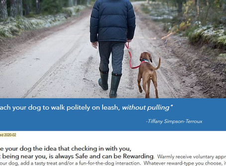 Teach your dog to walk politely on leash