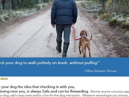 Teach your dog to walk politely on leash