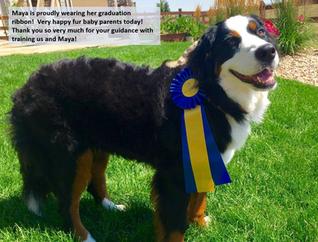 Praise Terroux Dog Training