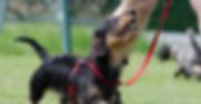 dachshund-672780_1280.jpg.png